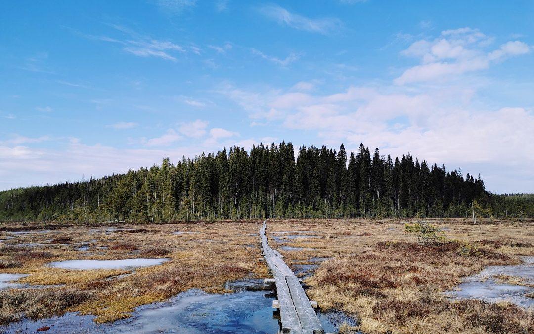 Siikaneva – upea luonnonrauhaa tarjoava päiväretkeilykohde Pohjois-Pirkanmaalla