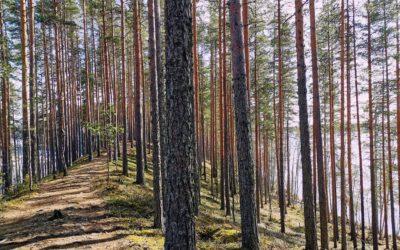Nautinnollinen yön yli retki keväiseen Leivonmäen kansallispuistoon