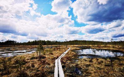 Levollinen yksinvaellus Hirvaan kierroksella Salamajärven kansallispuistossa