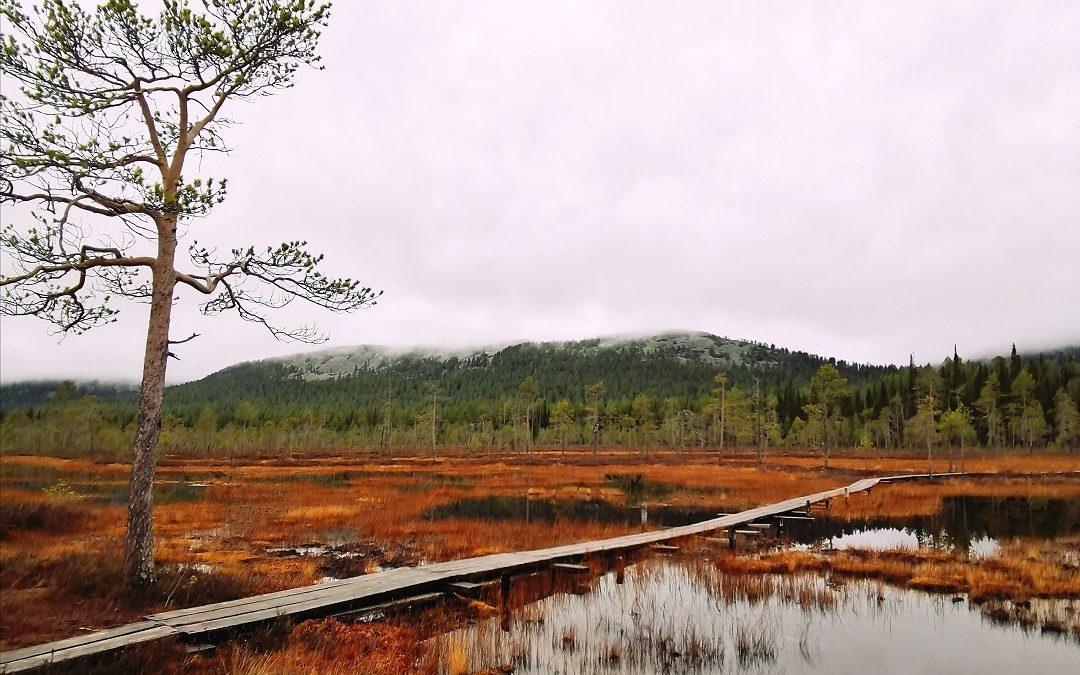 Syksyinen retkeilyviikko Pyhä-Luoston kansallispuistossa – neljä päiväretkeä tuntureiden tuuliin ja kurujen saloihin
