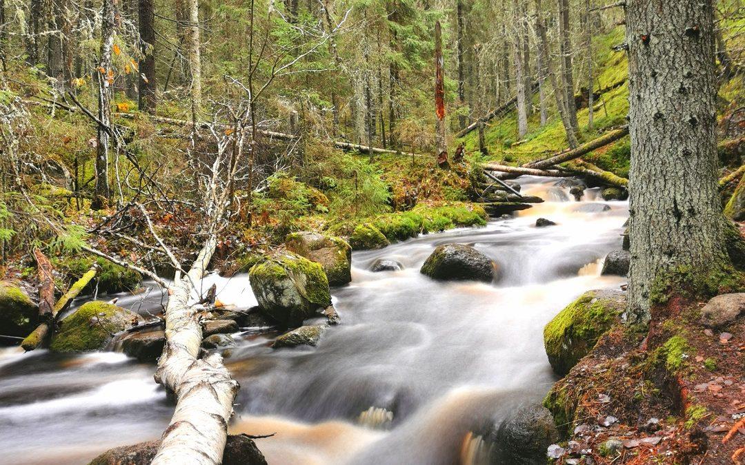 Kauhanevan-Pohjankankaan kansallispuisto – retkeilyä satumaisessa purolaaksossa ja kauniin suoluonnon keskellä