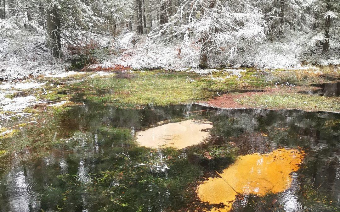 Lauhanvuoren kansallispuisto joulukuussa – retkeilyä rauhaisan luonnon keskellä ja telttayö pakkassäässä