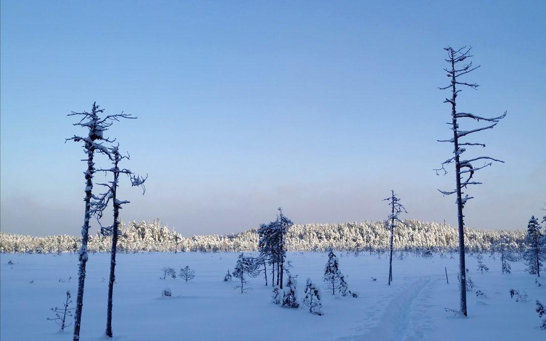 Lumikenkäretki mykistävän kauniiseen Pyhä-Häkin kansallispuistoon