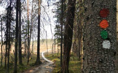 Tulijärven polun patikka keväisessä Pyhä-Häkin kansallispuistossa